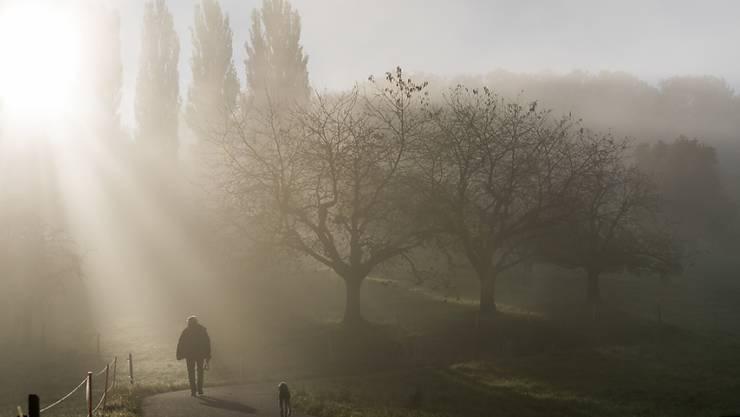 Ein Mann spaziert an einem Morgen Mitte Oktober am Stadtrand von Bülach an kahlen Bäumen vorbei. (Archiv)
