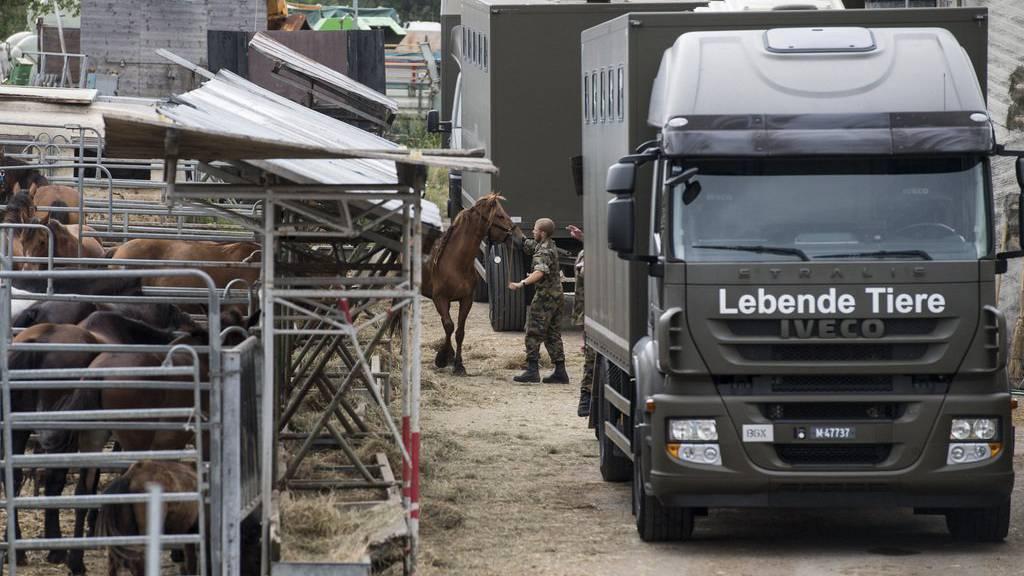 Das Militär sicherte im August dieses Jahres die Pferde vom Hof von Ulrich K., der unter dem Verdacht der Quälerei von Pferden steht