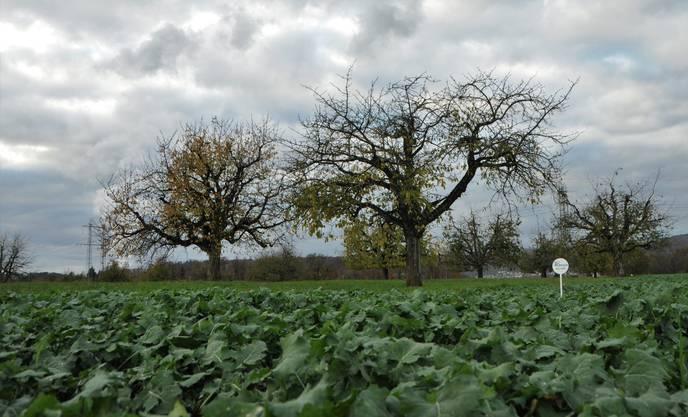Das Land gehört den Ortsbürgern, die Landwirte haben es gepachtet.