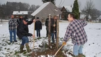 Guido Vollweider und Thomas Heggli pflanzen den Apfelbaum.  ES