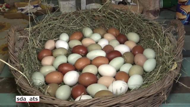 Die Hühner mit den grünen Eiern