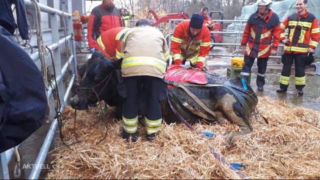 Nach Kuhrettung: Feuerwehr rüstet mit Neuheit auf