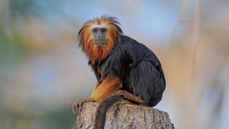 Die Tierwelt in Toni's Zoo hat einiges zu bieten.