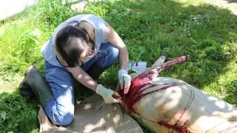 Tierärztin Regula Bucher behandelt das verletzte Schaf.