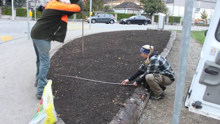 Mitarbeiter der Gärtnerei Egloff messen das Blumenbeet aus