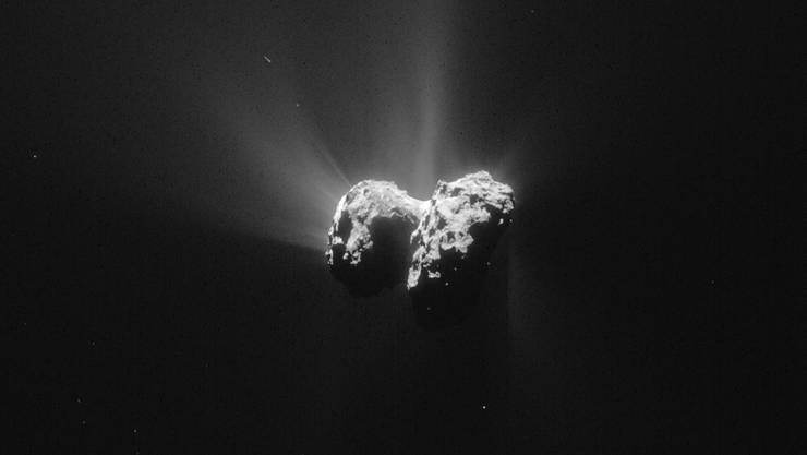 Auf Komet Tschuri könnten Mikroorganismen hausen, glauben britische Forscher.