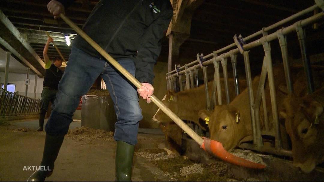 Aargauer Landwirtschaftsdirektor ist für einen Tag Stallbursche
