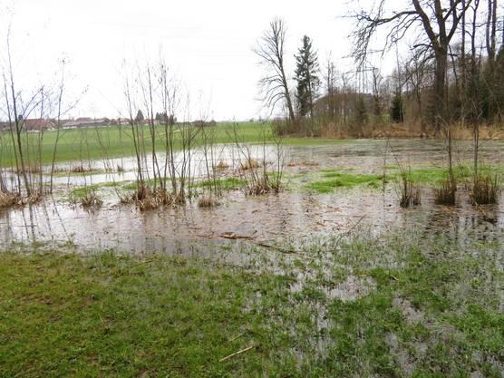 Zurzeit steht das Wasser auch im Landwirtschaftsland.