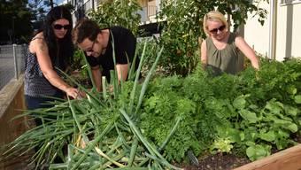 Es grünt überall: Das Urban Gardening stösst auf «helle Begeisterung» bei den Mietern (von links) Eva Delvecchio, Philippe Signer und Katrin Seiring.