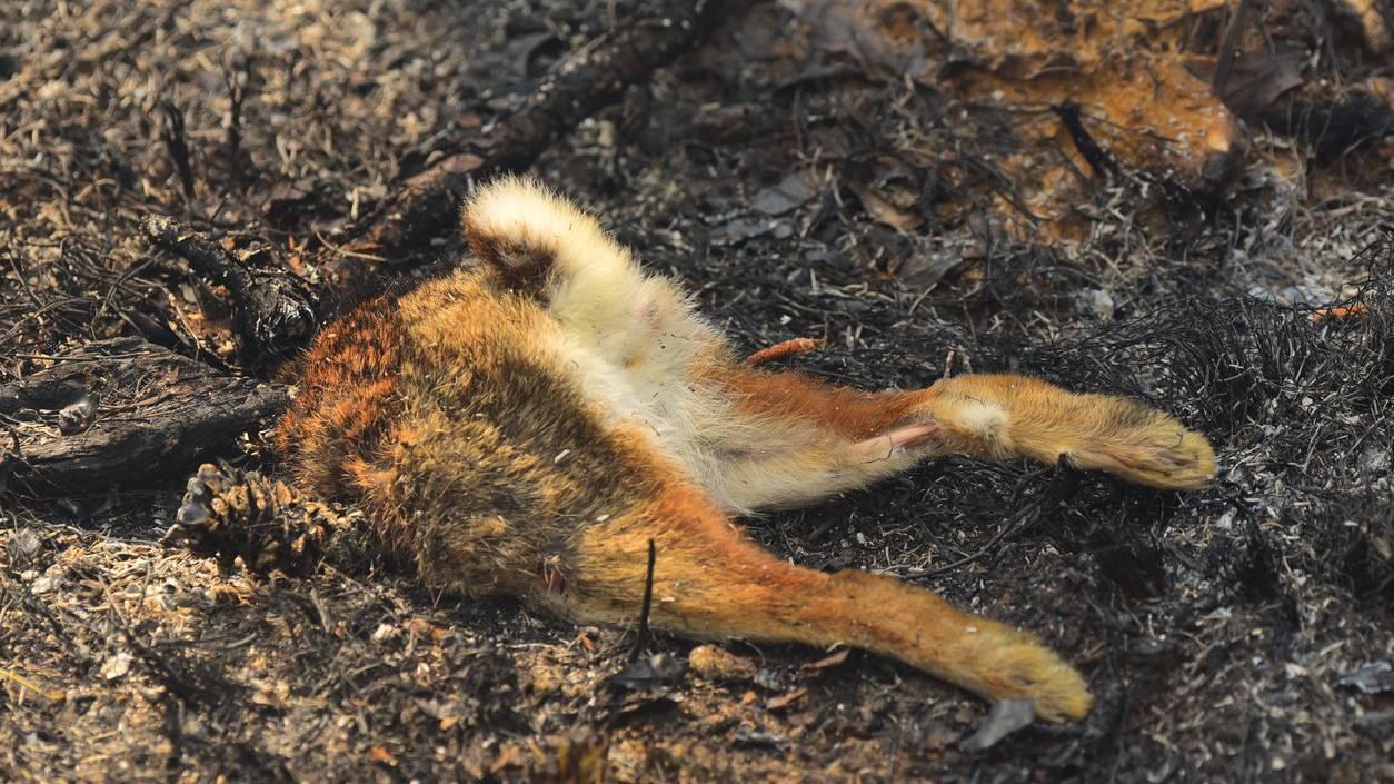 Am Bodenseeufer wurden im Februar mehrere tote Hasen gefunden. (Symbolbild)