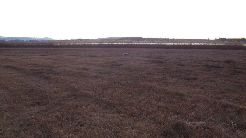 Auf dieser Wiese mitten im Naturschutzgebiet lag der getötete kapitale Rehbock.