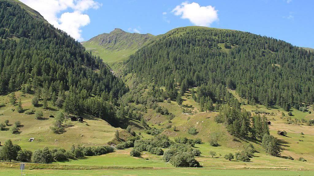 In Ulrichen im Obergoms ist eine Frau bei einem Wanderunfall ums Leben gekommen. Sie wurde auf dem Gommerhöhenweg von einem talwärts rollenden Baum getroffen und verstarb auf der Stelle.