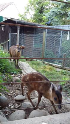 Mini-Zoo Dreier