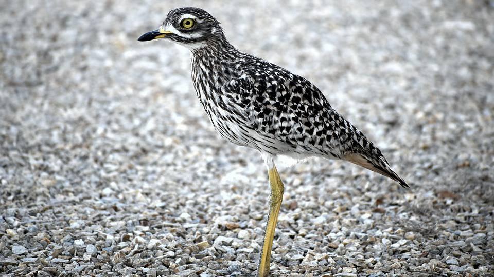 Bund warnt vor Vogelgrippe