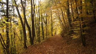 Die Stimmbevölkerung hat die Waldinitiative deutlich abgelehnt.