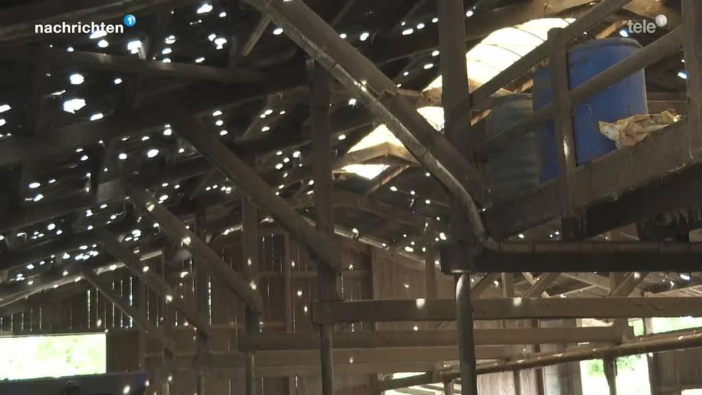 Reparaturarbeiten nach grossen Hagelschäden im Stall