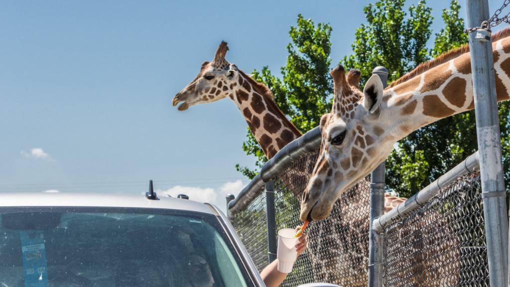 Verheerendes Feuer in US-Wildtierpark tötet drei Giraffen