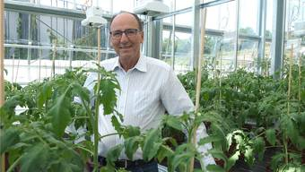 FiBL-Direktor Urs Niggli in einer der Klimakammern des neuen Gewächshauses, wo derzeit Tomaten wachsen.