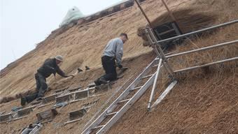 Schilf wird auf dem Dach befestigt. WPO