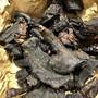 In einem Koffer geschmuggelt: über sechs Kilo Fleisch von Krokodilen, Schuppentieren und Stachelschweinen. Das Bushmeat wurde am Flughafen Zürich sichergestellt.