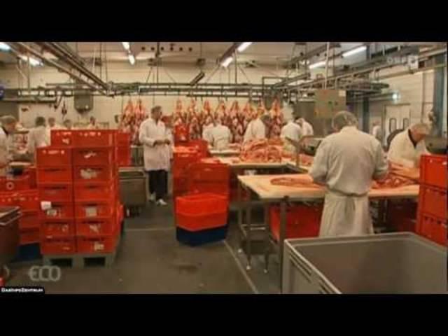 Pferdefleisch-Skandal von 2013