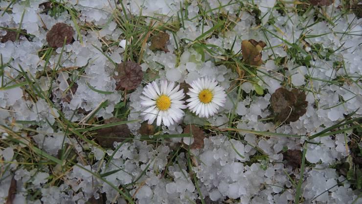 Winter und Frühling wechseln sich momentan ab.