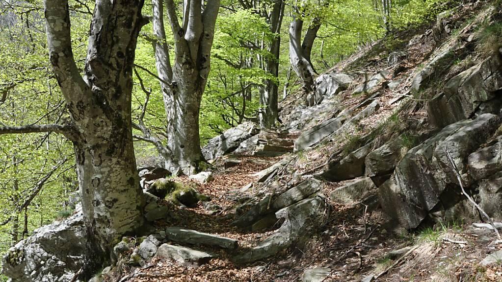Der Buchenwald der Valli di Lodano, Busai und Soladino gehört neu zum Unesco-Weltnaturerbe. (Archivbild)