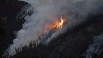 In Kalifornien wüten derzeit Waldbrände und zerstören zehntausende Hektar Wald.