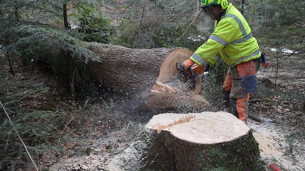 Unter dem Vorwand den Borkenkäfer zu bekämpfen, weitete die polnische Regierung die Holzschlagquoten für den letzten Urwald Europas massiv aus. Nach Ansicht eines EuGH-Gutachter ist dies rechtswidrig. (Symbolbild)