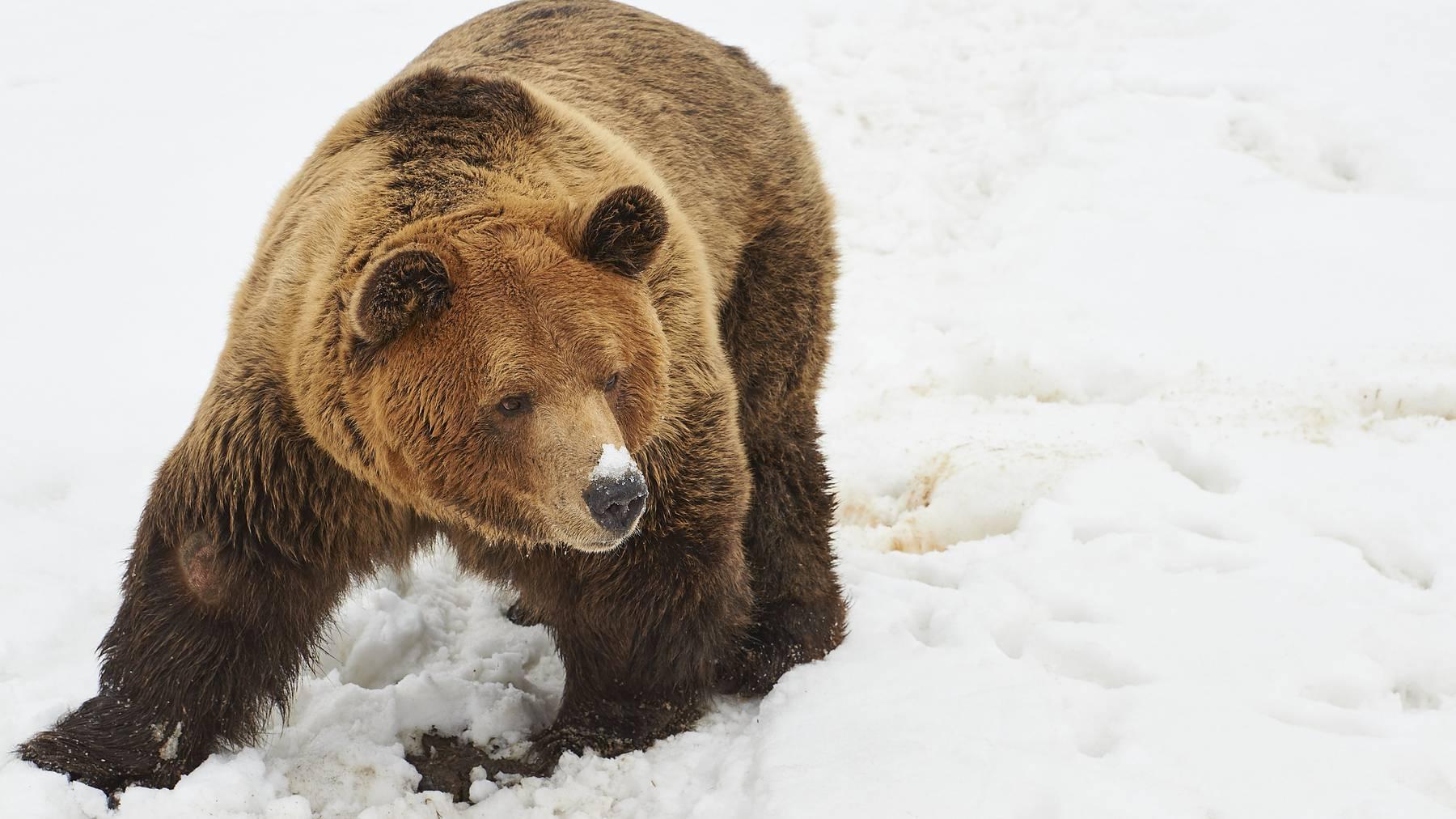Bär Meimo des Bärenlandes