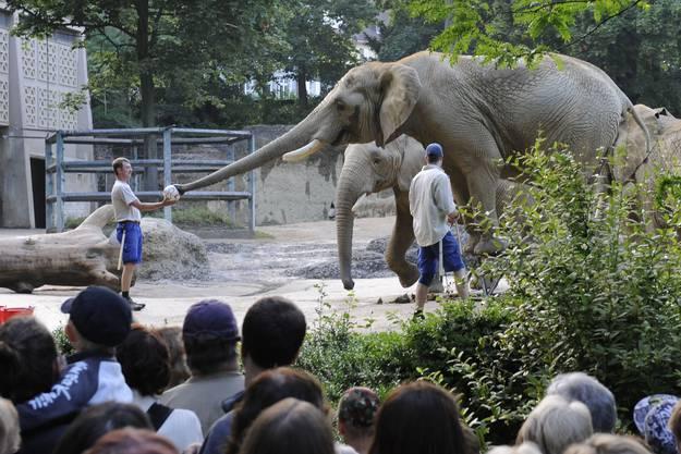 Pfleger bei den Elefanten
