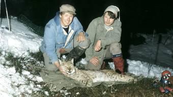 Urs Breitenmoser (rechts) und sein Kollege gaben 1984 einem betäubten Luchs ein Sender-Halsband mit.Foto: U. Breitenmoser