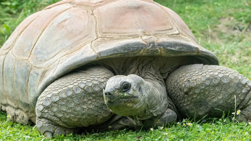 Schildkröte Schurli mit rund 130 Jahren im Wiener Zoo gestorben