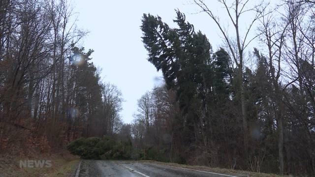 Stürme, Hitze und Brandgefahr: Wie geht es unserem Wald?
