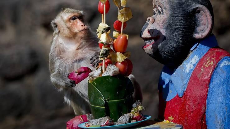 Normalerweise gibt es Früchte nicht so auf dem Präsentierteller. Die aufwändige Suche und das knifflige Entfernen von unverdaulichen Schalen könnte das Gehirn von Primaten grösser gemacht haben. (Archivbild)