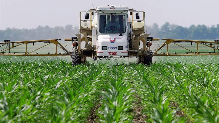 Hochgiftiger Schutz für Maisfelder in den USA: Das Herbizid Atrazin.