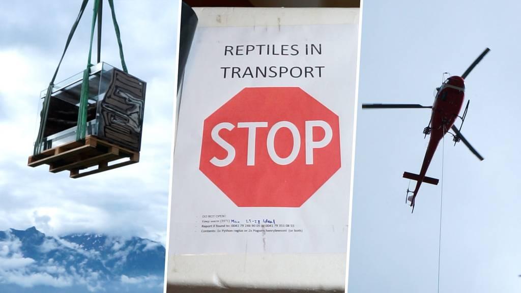 Helikopter statt Zügelmänner – in Buchs fliegen die Terrarien