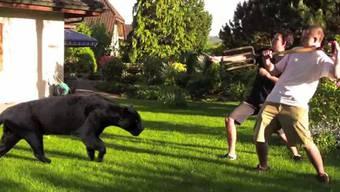 Cabarandi und Kevä machen Jagd auf den Panther
