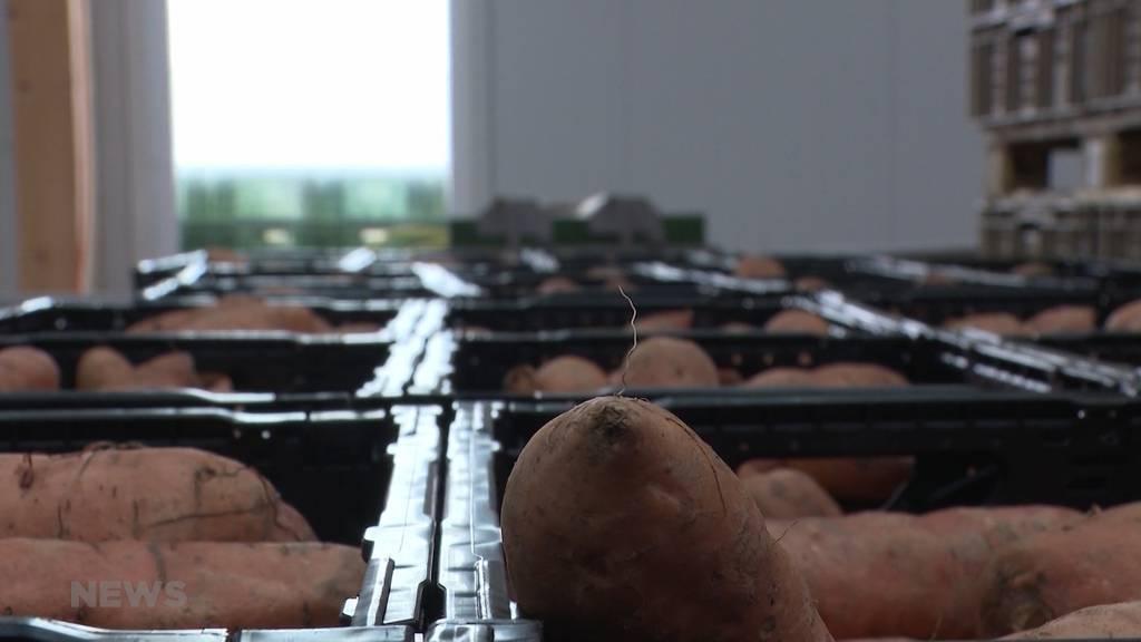 Fribourger Süsskartoffelbauern gewinnen den Ceres-Award