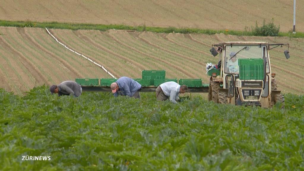 Bauern stellen Flüchtlinge ein