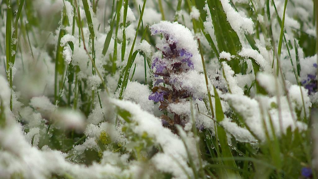 Die «Eisheiligen» bringen Schnee bis unter tausend Meter