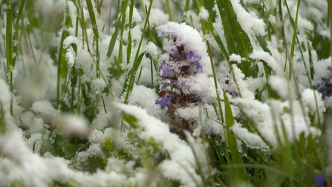 """Die """"Eisheiligen"""" bringen Schnee bis unter tausend Meter"""