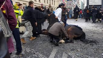 Das am Fasnachts-Montag gestürzte Pferd am Cortège. zvg