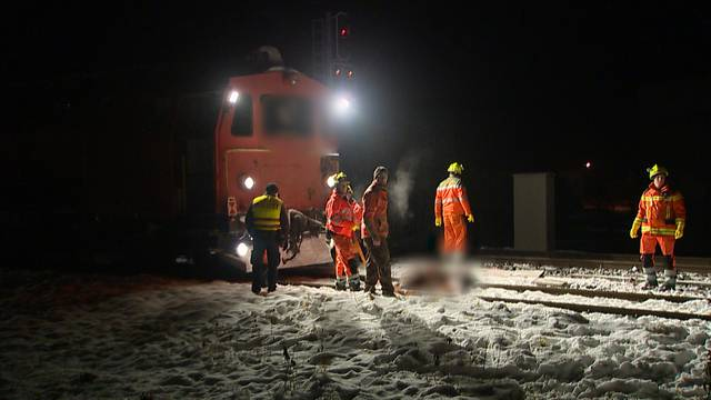 Erneutes Pferdeunglück: Vier tote Pferde nach Kollision mit SBB-Zug