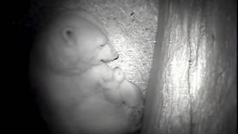 Die Bremerhavener Eisbärenmutter Valeska mit Baby Lale im Januar 2014. Ähnlich dürfte sie derzeit ihr neues Baby betreuen. (Archiv)