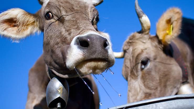 Ein Zürcher Bauer will seinen Kühen die Glocken nicht abnehmen - und geht dafür bis vor Bundesgericht. (Symbolbild)