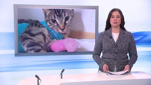 Katze angeschossen: Senioren in Trüllikon verhaftet