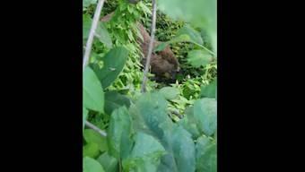 Ein recht grosses Expemplar: der Biber, der kürzlich durch einen Garten beim Aarepark wanderte.