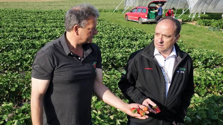 Markus Dieth im Gespräch mit Willi Staubli, Präsident der Vereinigung Aargauischer Beerenpflanzer.