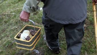 Pilzsammler im Bündner Oberland (Symbolbild)